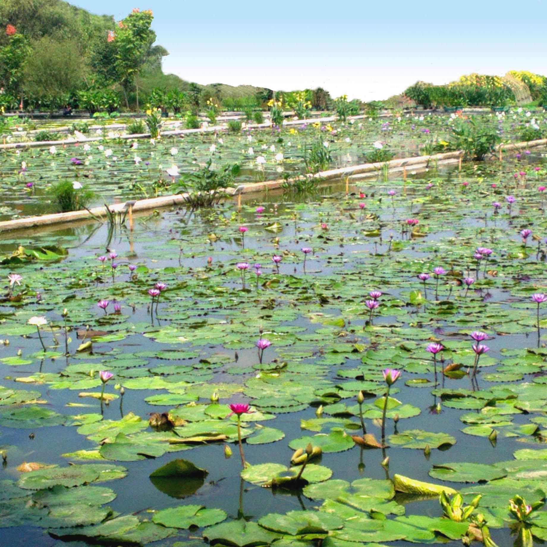 杭州天景水生植物园有限公司